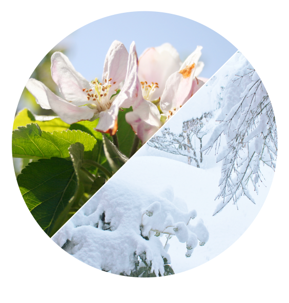 長野県小布施町・鮮度に自信!産地直送の梨通販ショップ|Su-eat Farm Pear(スイートファーム・梨通販ショップ)|スイートファームのこだわり・温度差・寒暖差