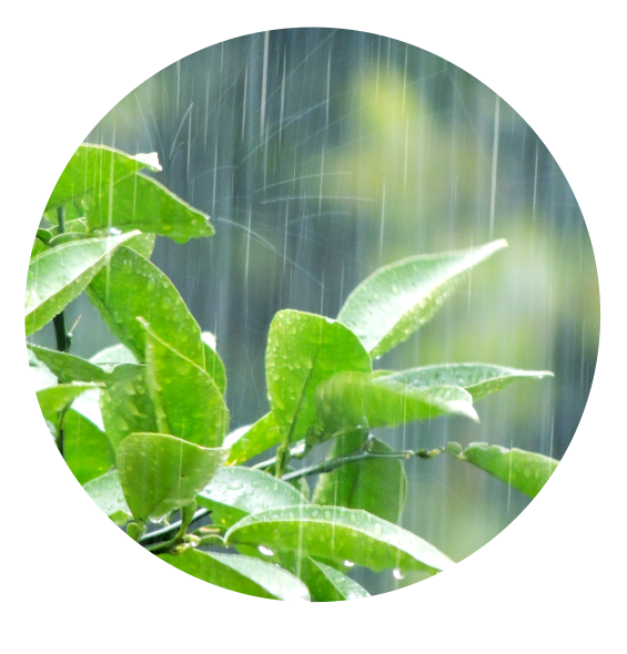 長野県小布施町・鮮度に自信!産地直送の梨通販ショップ|Su-eat Farm Pear(スイートファーム・梨通販ショップ)|スイートファームのこだわり・降水量