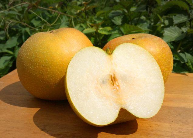 長野県小布施町・産地直送の梨通販ショップ|Su-eat Farm Pear(スイートファーム・梨専門店)|長野の梨(梨)を品揃え
