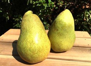 長野県小布施町・鮮度に自信!産地直送の梨通販ショップ|Su-eat Farm Pear(スイートファーム・梨通販ショップ)|1個からお好きな商品をカスタマイズ