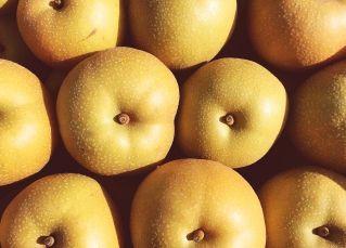 長野県小布施町・産地直送の梨通販ショップ|Su-eat Farm Pear(スイートファーム・梨専門店)|大切な方への送り元