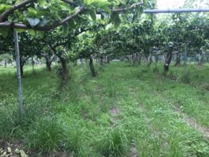 梨ファームの様子