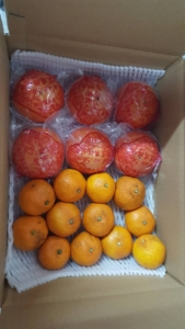 みかんと 甘柿 のカスタムオーダー
